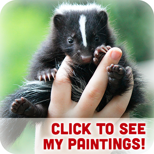 White-striped Skunk