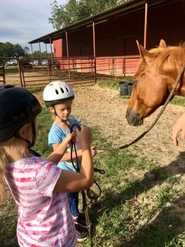 Beginner Horse Camp for Ages 6-12