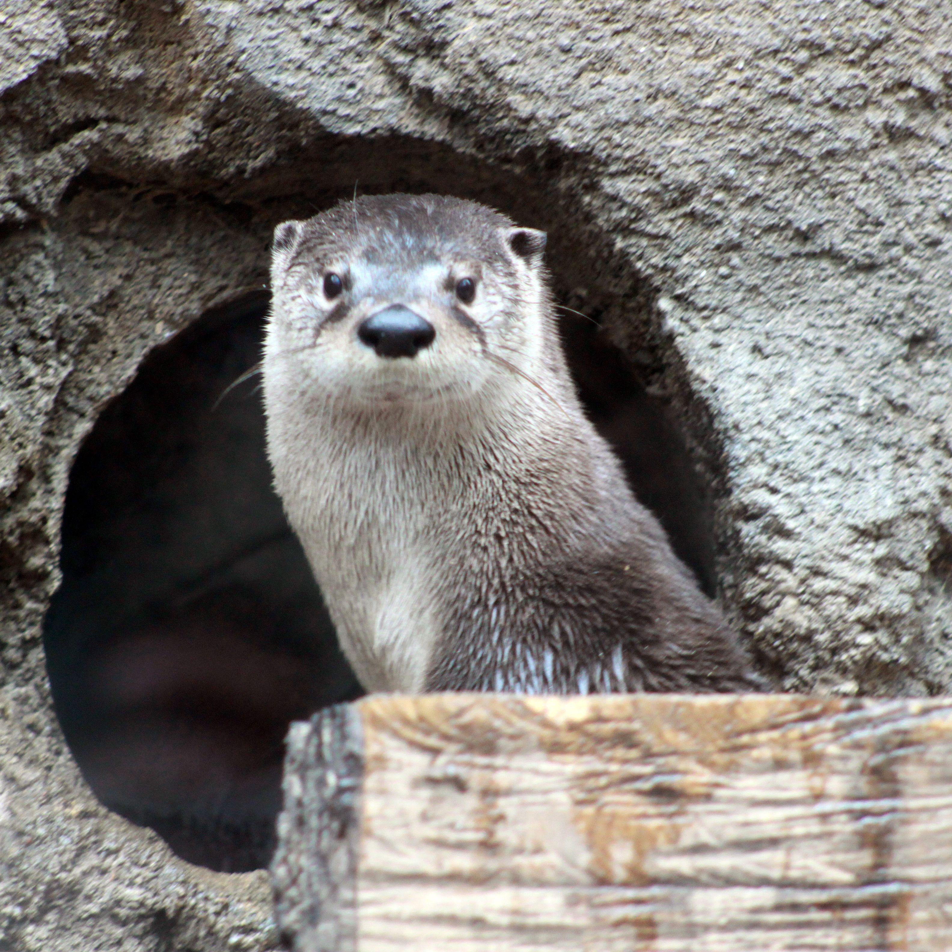 Richard the Otter