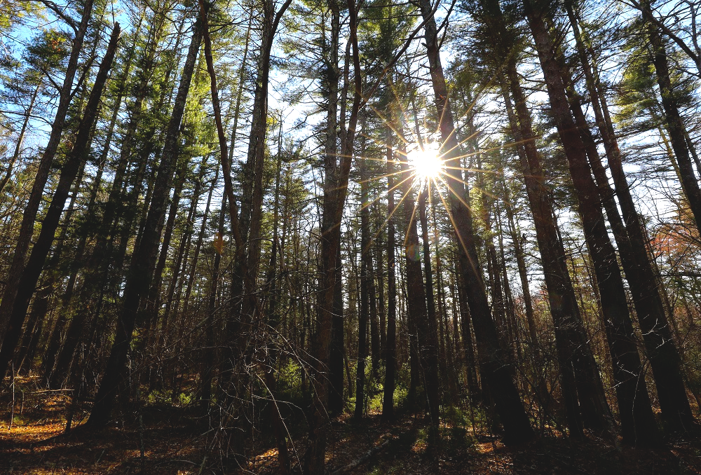 The Fight to Protect Our Forests: Audubon Society of RI Supports the Rhode Island Woodland Preservation and Stewardship Act of 2019 By Todd McLeish; Environment Conservation, Education Advocacy