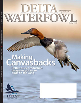 Spring Magazine Issue Features Delta's Work on Canvasbacks