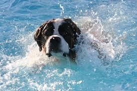 Hold a Dog Swim