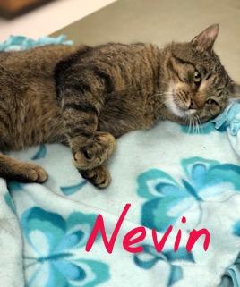 Nevin