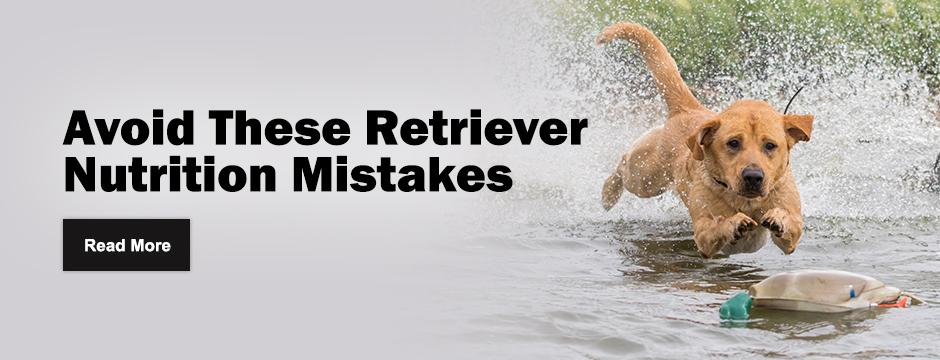 Avoid These Retriever Nutrition Mistakes