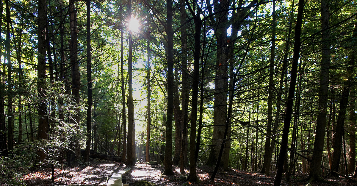 Forest Bathing with Jane Dobson
