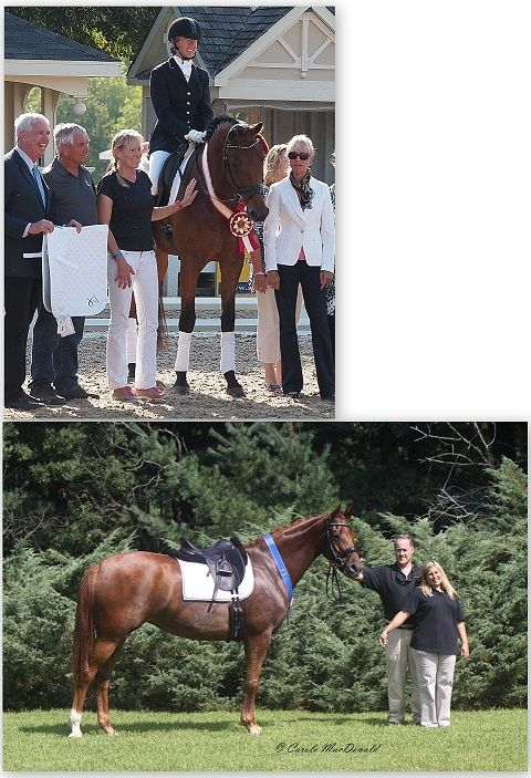 TDF Awards Grants from Elysium Farm Fund for U.S. Breeder Excellence