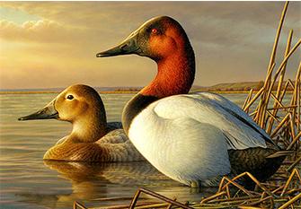 South Dakota Artist Wins U.S. Duck Stamp Competition