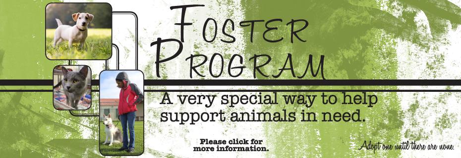 c foster