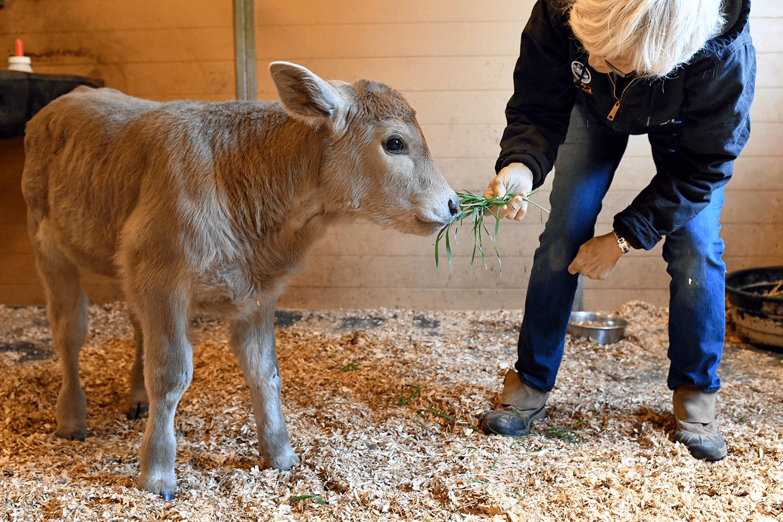 Horse & Barn Animal Rescue