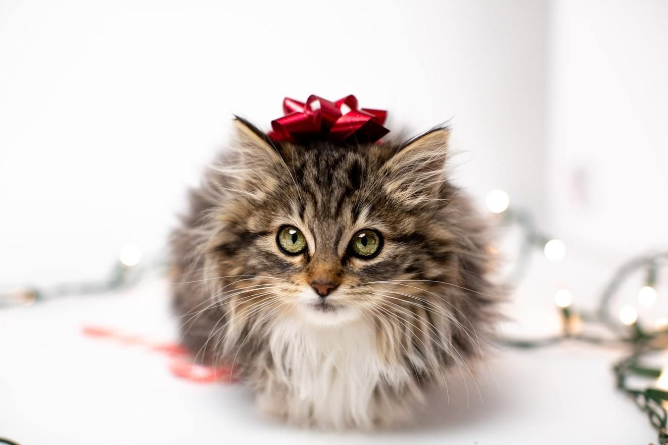 Managing Holiday Anxiety Triggers for Pets