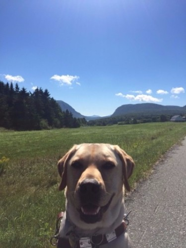 Alvin with Mt. Pisgah and Mt. Hor in the background, Westmore, Vermont, August 23