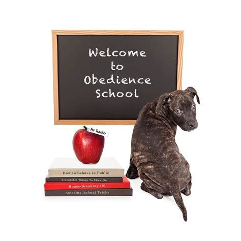 Obedience Training Support