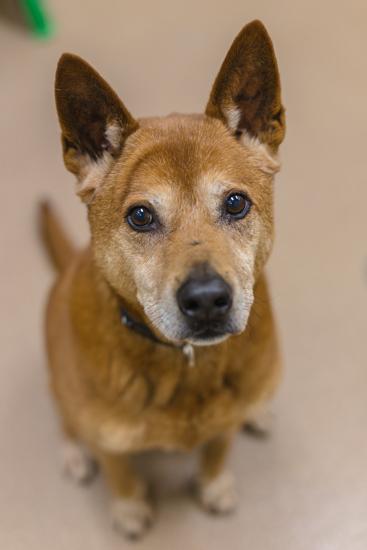 Lincoln Dog Amp Puppy Adoption