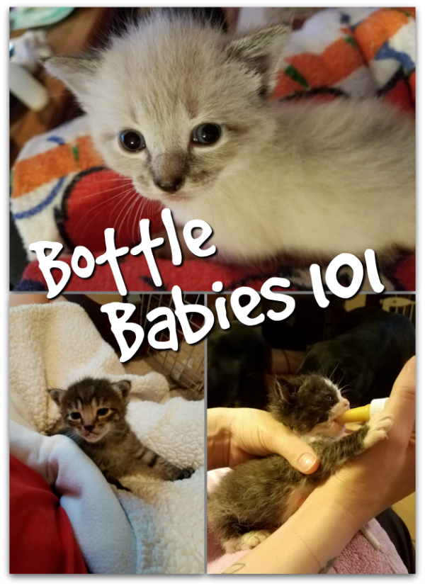 Do You Want to Foster Bottle Babies?