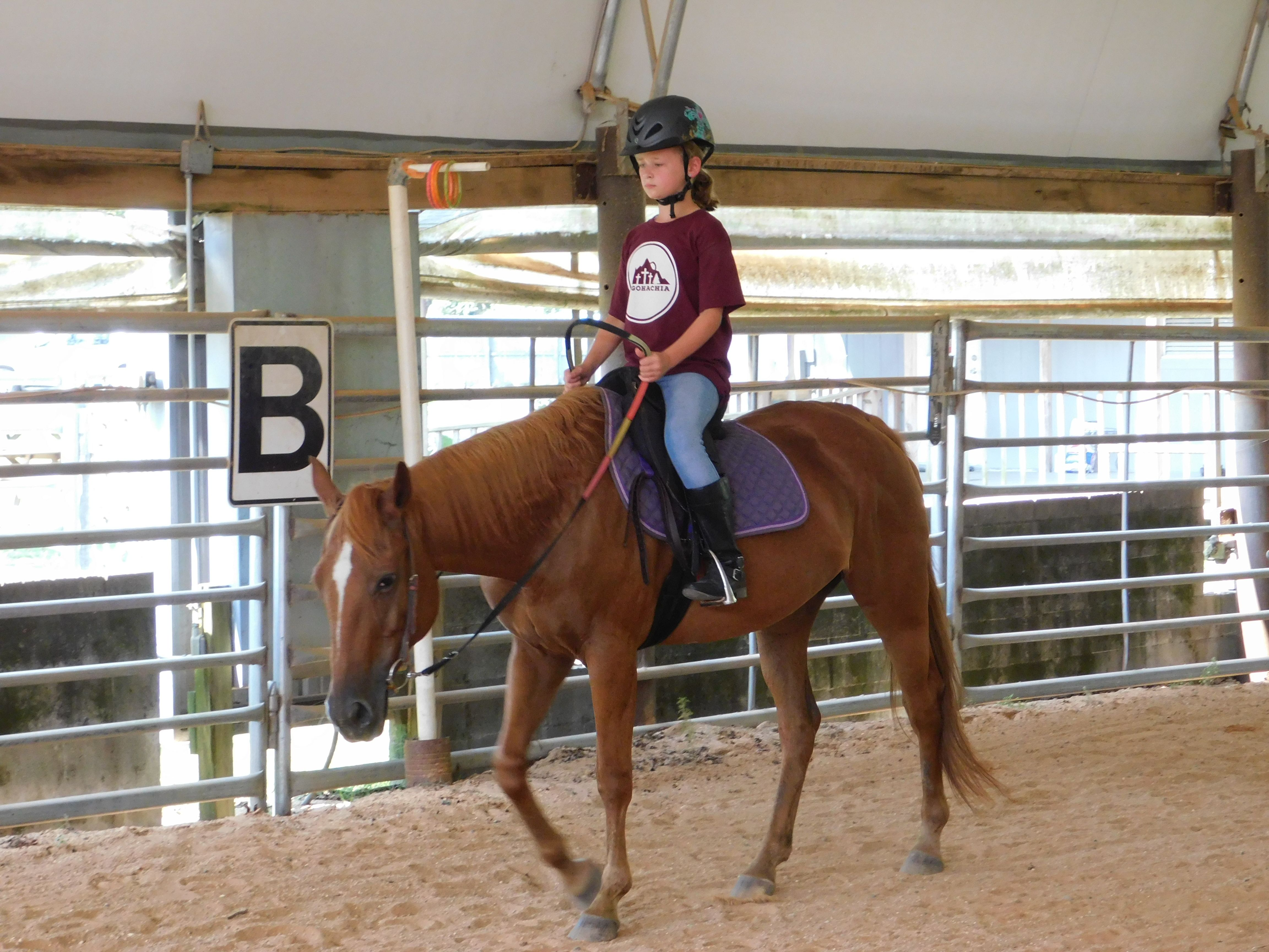 Beginner II and Intermediate English Horse CAmp