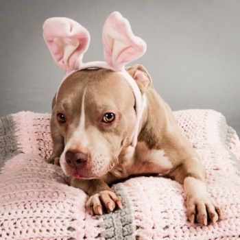 Celebrate Easter With Your Dog