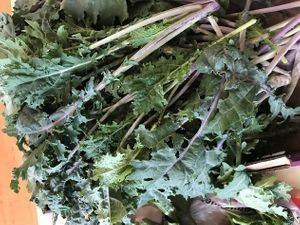 11/1/20: Nutritious Greens
