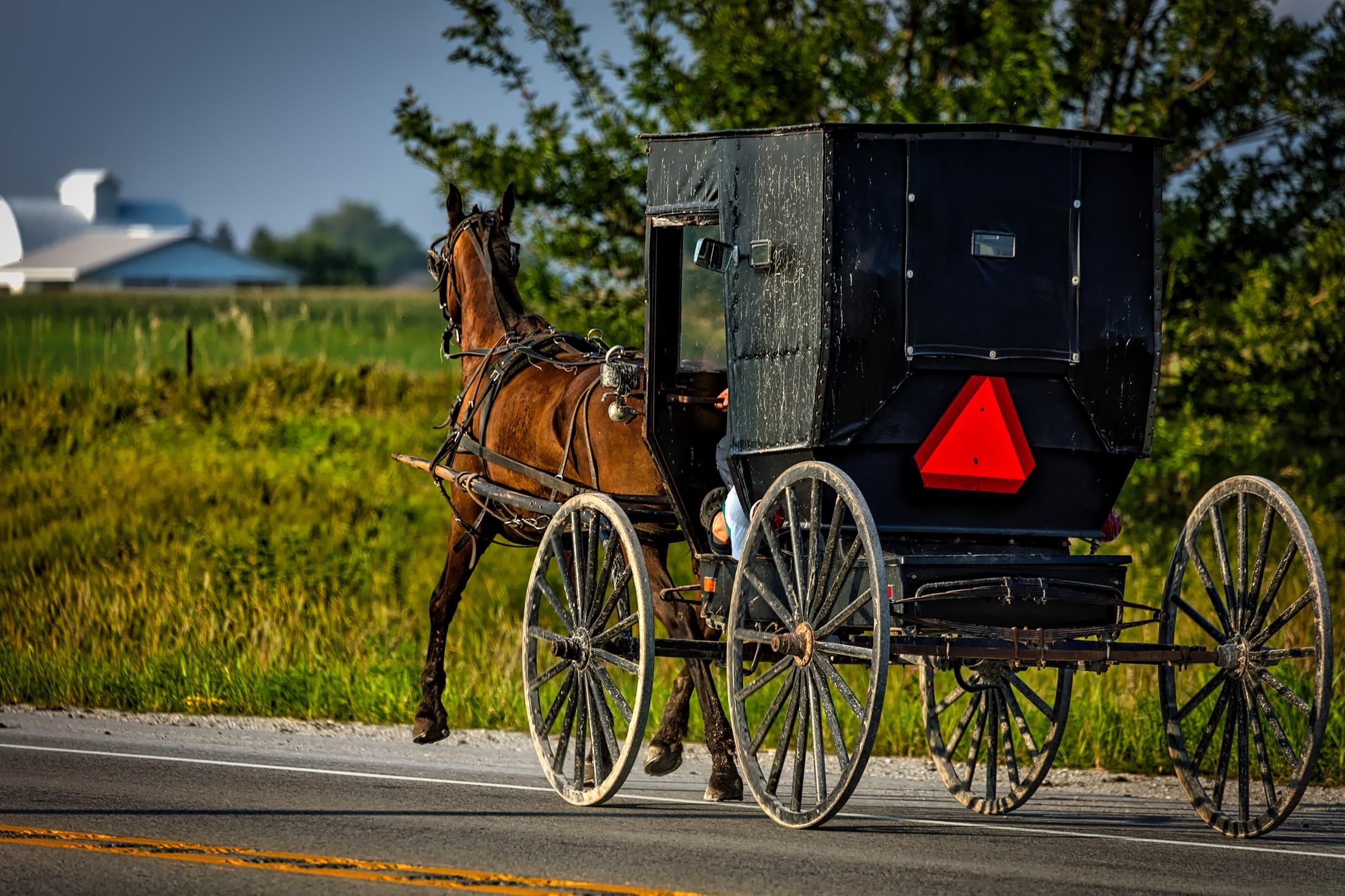 Amish Project