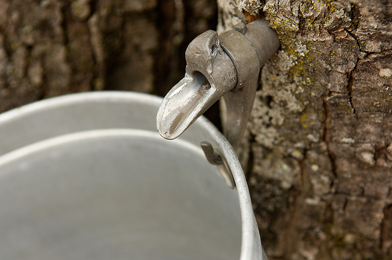 Maple Sugaring at Caratunk