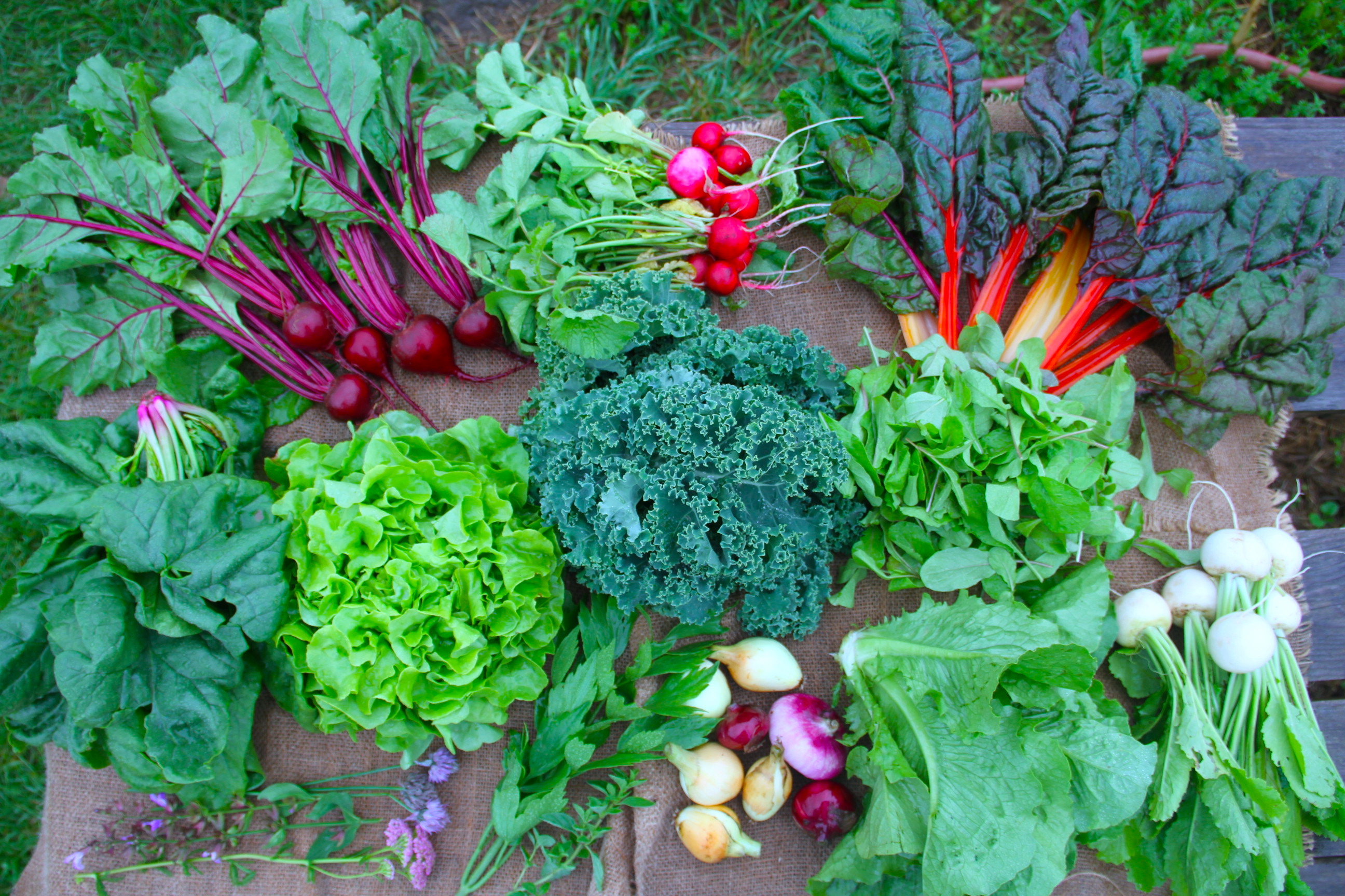 Summer-Fall Season Vegetable CSA (Half Share)