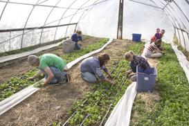 Food Day Crop Mob spinach weeding