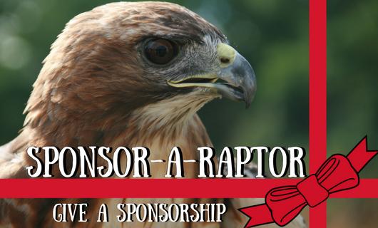 Sponsor-A-Raptor Holiday Gifting