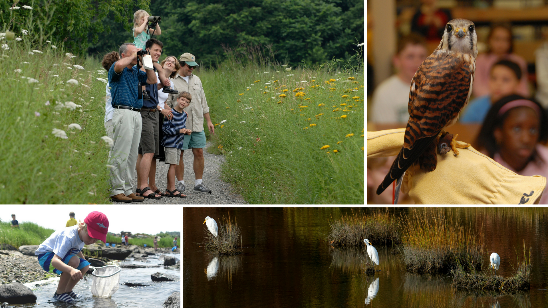 Audubon Society Rhode Island Membership: Great for Family | Nature programs | Birdwatching | Protection of environment