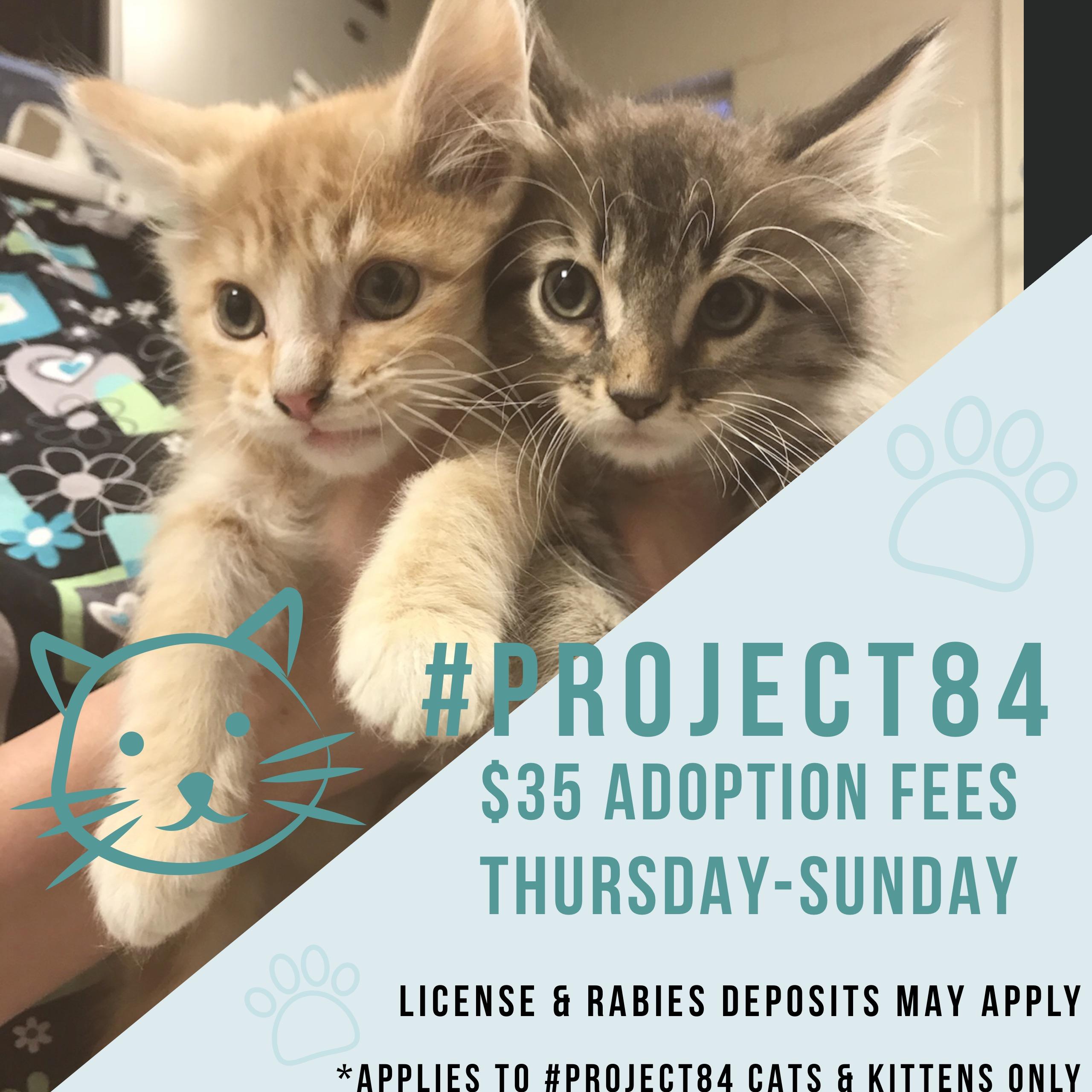 #Project84 Adoption Update