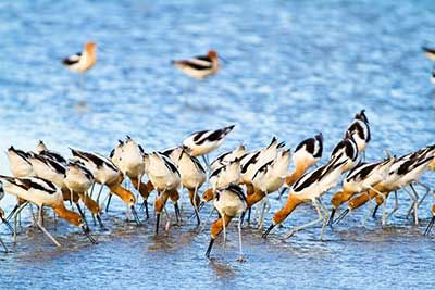 Hear Thousands of Birds on Bolivar Peninsula