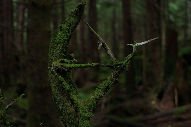 Rainbird 12, Moss Triangle