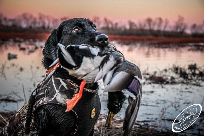 Delta waterfowl fun stuff january 2015 for Wisconsin exterior goose season