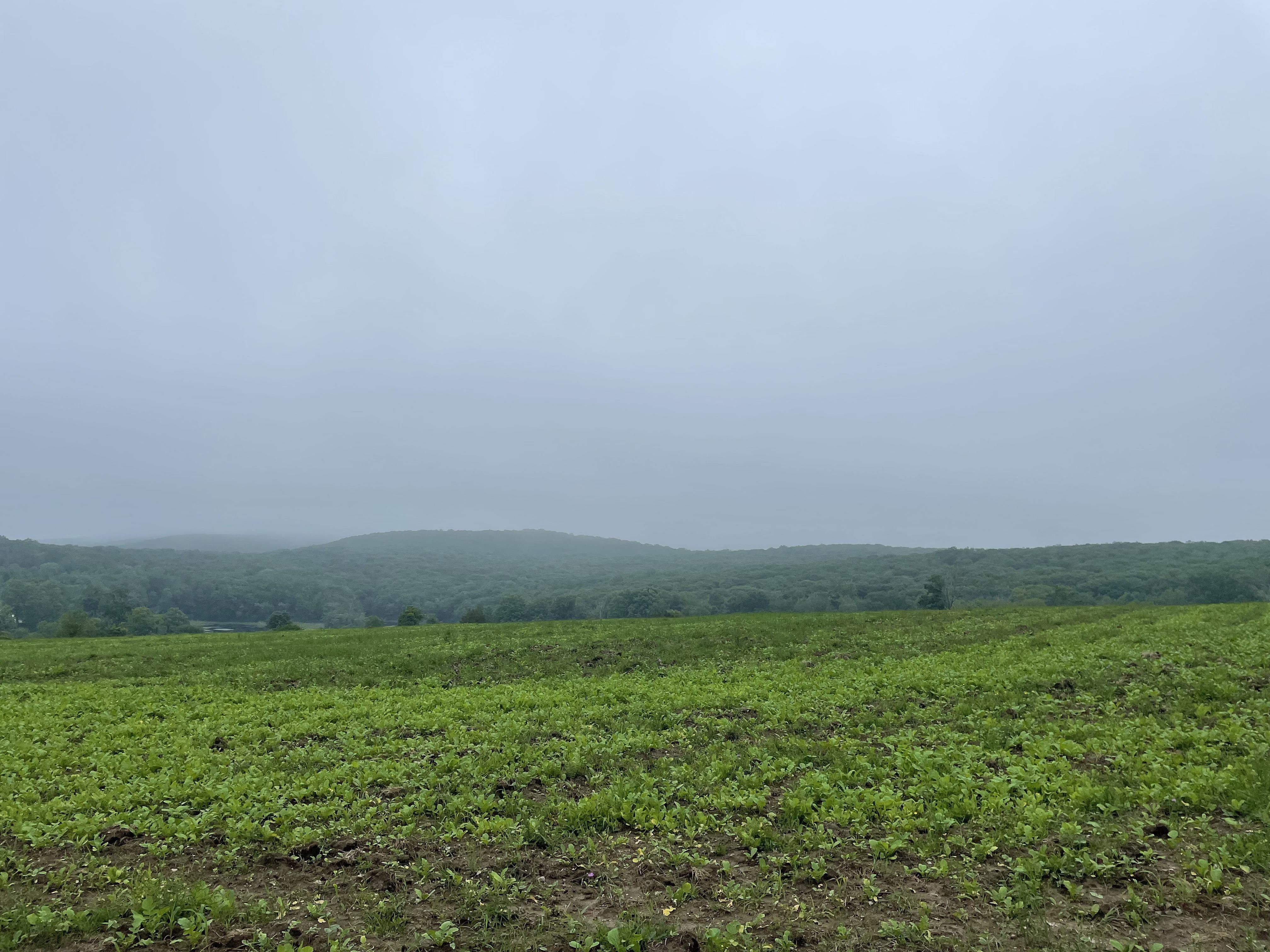 Using Termination Tillage to Redefine our Pastures