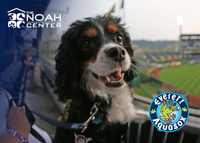 AquaSox Bark in the Park-July 22nd