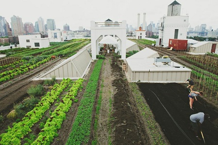 Bus trip: Brooklyn Grange Rooftop Farm and Brooklyn Botanic Garden