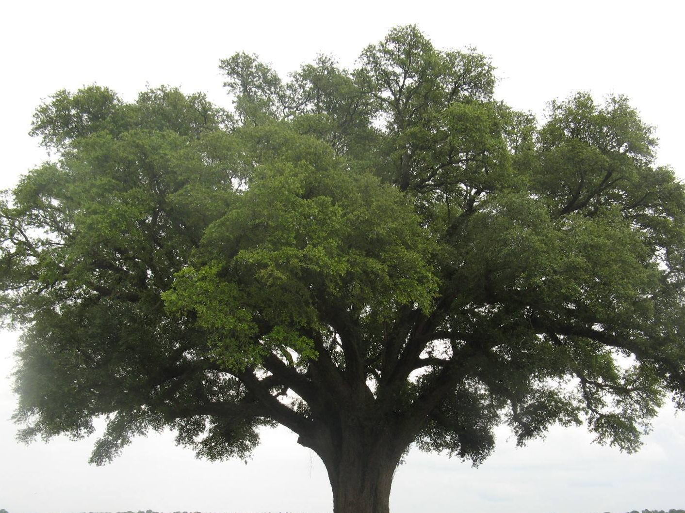 Writing or Revising your Community Tree Ordinance?