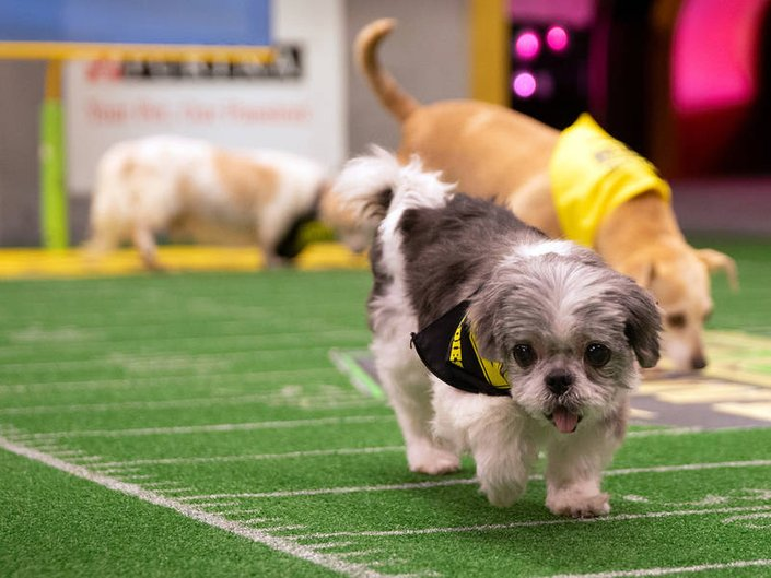 Bergen Pooches Playing In Animal Planet's Dog Bowl II