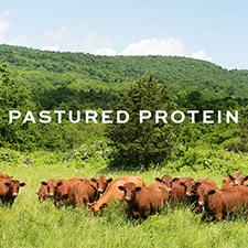 Pastured Protein