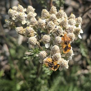 Guadalupe Center Pollinator Garden