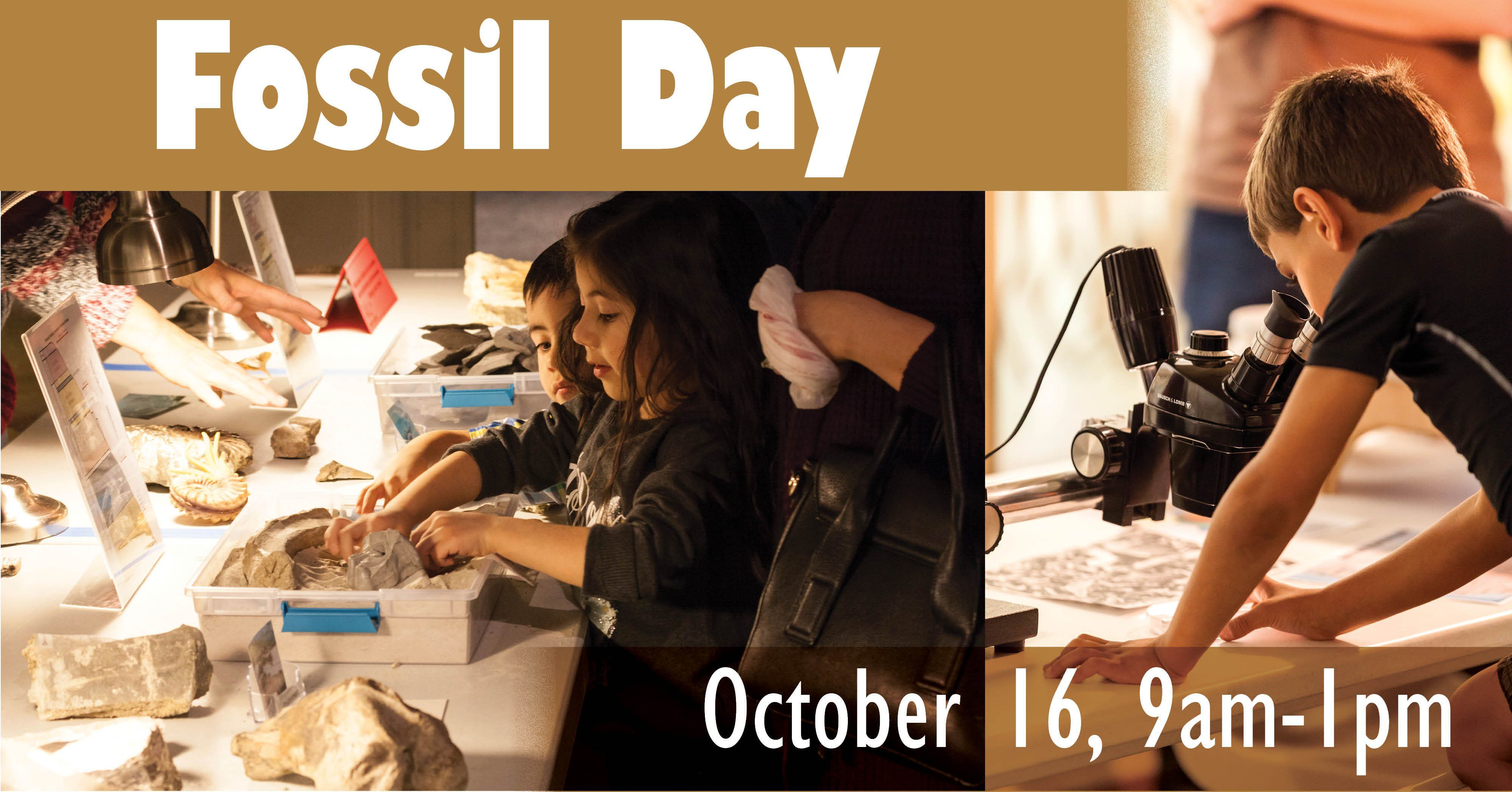 Children explore fossil activities during a Fossil Day event at Morrill Hall museum.