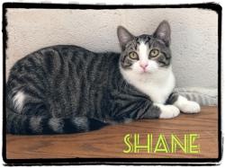 Shane 41419