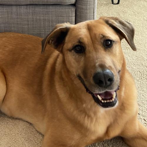 LOST: Dog (Coco)