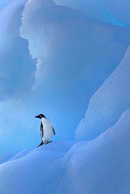 Land of Blue Ice