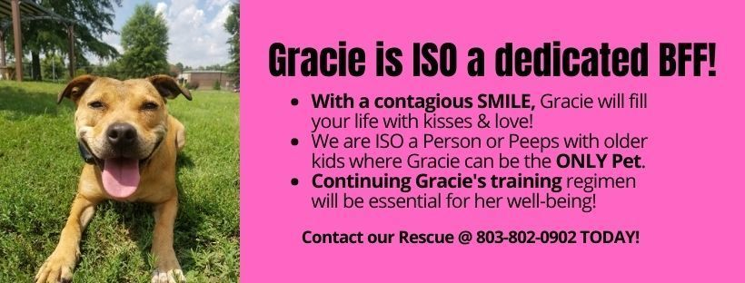 Adopt Gracie!