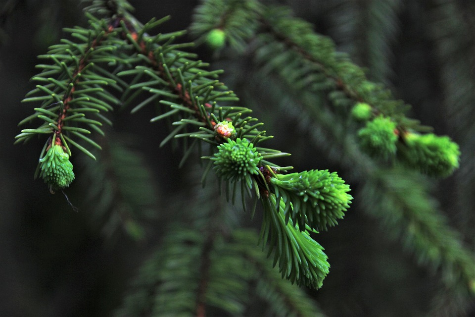 Holiday Greens: Leave the Greens for Wildlife