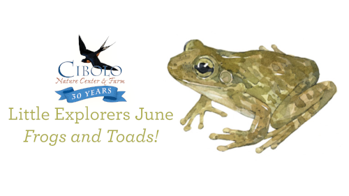 CNC: Little Explorers - Fun with Frogs and Toads!
