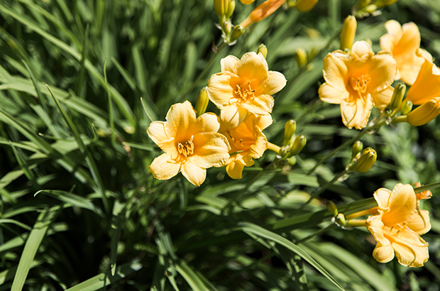 Photo of yellow spring flowers