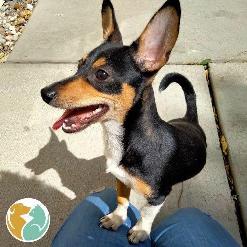 VINNIE - Adopted 09/10!