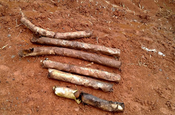 60 bomblets found in Quang Tri garden