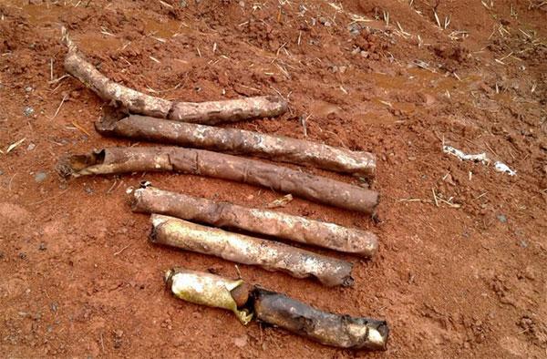 60 bomblets found in Quang Tri garden
