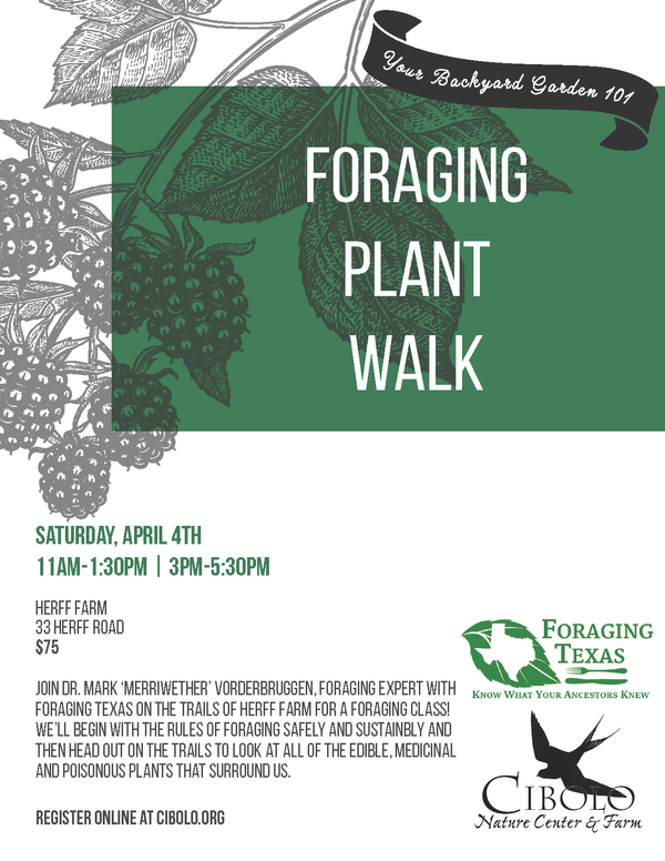 Postponed: Foraging Plant Walk